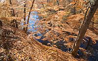 Rancocas Creek, Historic Smithville Park, Burlington County Park, New Jersey