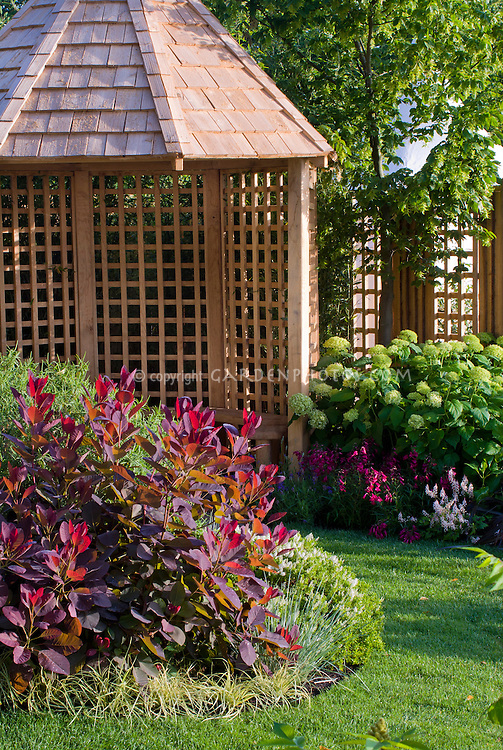 Garden gazebo building with hydrangeas & Cotinus Grace in spring, lawn grass, backyard pretty scene with fence