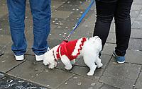 Nederland  Amsterdam - 2017. Toeristen laten een hondje uit in Amsterdam.   Foto Berlinda van Dam / Hollandse Hoogte