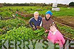 Pictured at the allotments in Castleisland on Thursday morning, were l-r: Sean Hanly, Willie Reidy and Mary Nelligan.