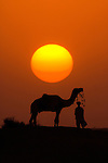 A silhouetted dromedary camel and trader, Pushkar Camel Fair,  Rajasthan, India