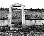 Chevaliers-Montrachet Vineyard, Burgundy