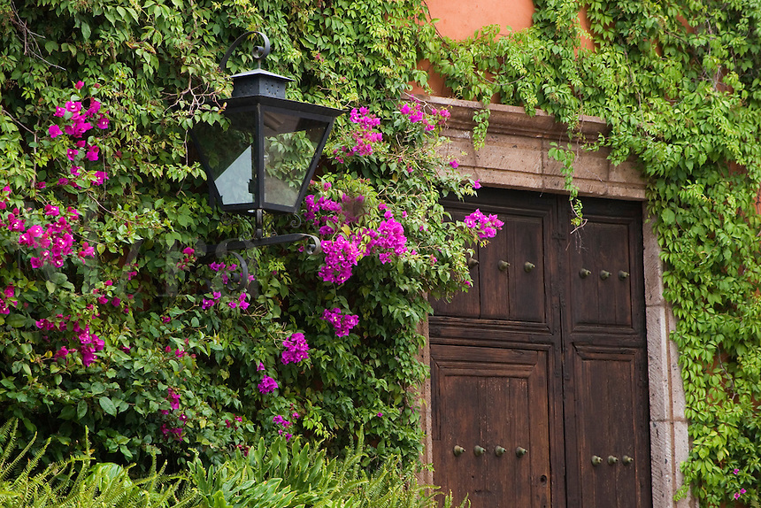 Bougainvillea & ivy cover a wall & surrounds a door & street light in SAN MIGUEL DE ALLENDE - MEXICO.