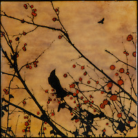 Red berry branch photo transfer with crows over encaustic painting.