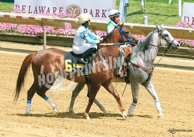 Galiana before The Dashing Beauty Stakes at Delaware Park on 7/11/15