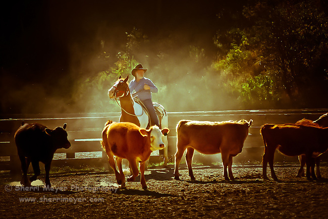 Jeff Meyer rounding up the cows at Hidden Creek Ranch, Idaho.