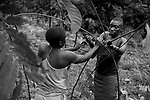 """Two women of the pygmy tribe Baka building a """"Mongulu"""", traditional household of this tribe, is a semispherical hut made with branches and leaves of tree. The Baka live in the jungle near Dja river beside to the Congo border, they are Nomadic Hunter-gatherers and one of the oldest human groups in the world."""