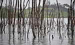 Flooded by the construction of the Belo Monte Dam on the Xingu River, dead trees stick out of the water near Altamira, Brazil. In addition to the massive displacement of tens of thousands of people, many of them indigenous people, the flooding of the forest released high levels of greenhouse gases that contribute to the climate crisis.