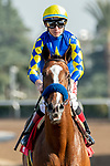 ARCADIA, CA  JANUARY 4: #1 Authentic, ridden by Drayden Van Dyke returns to the connections after winning the Sham Stakes (Grade lll) on January 4, 2020 at Santa Anita Park in Arcadia, CA.  (Photo by Casey Phillips/Eclipse Sportswire/CSM)