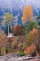 Trees in Fall, after first snowfall on the mountainside, New Denver BC