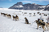 USA, Alaska, Juneau, the dogs prepare for their tour, Helicopter Dogsled Tour flies you over the Taku Glacier to the HeliMush dog camp at Guardian Mountain above the Taku Glacier, Juneau Ice Field