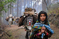 Seventeen-year-old Mariam leads her family's caravan through the foothills of the Himalayas, while carrying her two-year-old niece in a shawl.