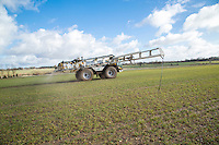 Applying suspension fertilser onto winter barley - Norfolk, February