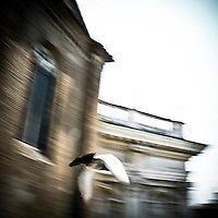 Il volo del piccione<br /> The flight of pigeon