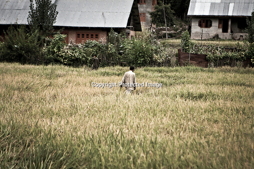 "Kashmiri Muslim men walks across a crop field towards Dolipora village in Lolab valley, northern Kashmir. The bottom of the valley, as well as the entrance to it, is under control by Indian army, but the Islamist militancy is spread out in the surrounding mountains. By its beauty, spirituality and cultural treasures, Kashmir is considered ""the crown of India"", but it is a crippled place strained under rigid siege imposed by Indian rule. Kupwara district, Indian administrated Kashmir."