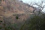 Ranthambhore National Park; Rajasthan