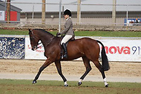 Hunter over 16.2hh