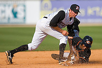 Delmarva Shorebirds 2009