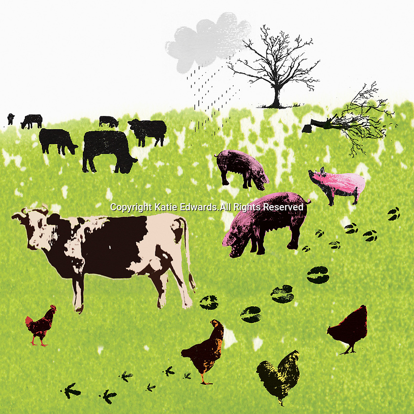 Carbon footprints of farm animals in field