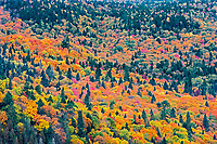 Autumn  colors in the Laurentian Mountains. Great Lakes - St.  Lawrence Forest Region.<br />