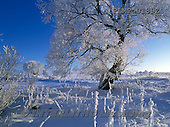 Marek, CHRISTMAS LANDSCAPES, WEIHNACHTEN WINTERLANDSCHAFTEN, NAVIDAD PAISAJES DE INVIERNO, photos+++++,PLMP0189Z,#xl#