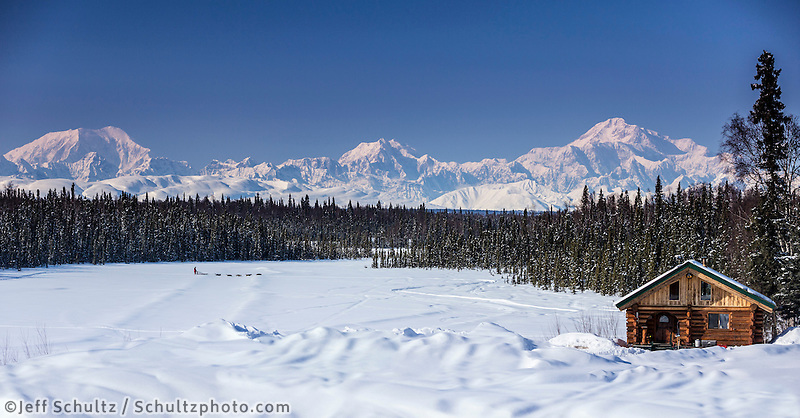 Dog musher Martin Buser runs his team during a spring training run on a lake with Mt. Mckinley and Alaska Range in the background and log cabin in foreground.   Southcentral, Alaska<br /> <br /> MR2013-03-23BuserMartin / PR2013-03-23SchorrJim Cabin