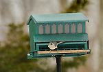 Bird Feeder with titmouse.