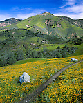A trail cuts through a hillside carpeted by spring wildflowers in the San Rafael Mountains, Santa Barbara County, CA.
