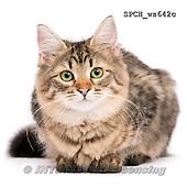 Xavier, ANIMALS, REALISTISCHE TIERE, ANIMALES REALISTICOS, FONDLESS, photos+++++,SPCHWS642C,#A#