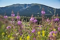 Europe/France/Languedoc-Roussillon/66/Pyrénées-Orientales/Cerdagne:Mont-Louis:  La voie ferrée du Train jaune de Cerdagne et le  sommet du Cambre d'Aze (2750m)