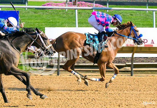 Turning The Table winning at Delaware Park on 8/19/17