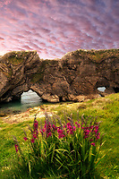 Arches with gladiola flowers. Near Lulworth Cove. Dorset. Jurassic Coast, England