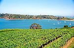 Vineyard hills and bay on scenic Whaiheke Island in Hauraki Gulf near Auckland New Zealand landscape