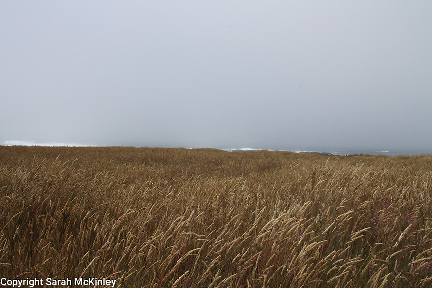 A field of dry grass with a sliver of the Pacific Ocean at the horizon beneath a slightly foggy sky at MacKerricher State Park near Fort Bragg in Mendocino County in Northern California.