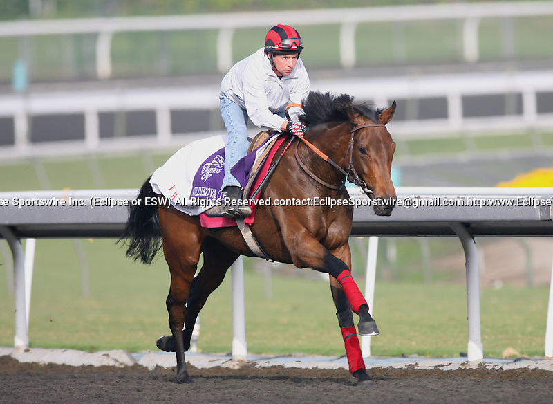 05 November 2009: Goldikova works in preparation for the Breeders' Cup at Santa Anita Park
