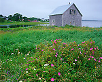 Lunenburg County, Nova Scotia, Canada: Weathered grey boat house with shoreline roses on Rose Bay with village houses in the distance
