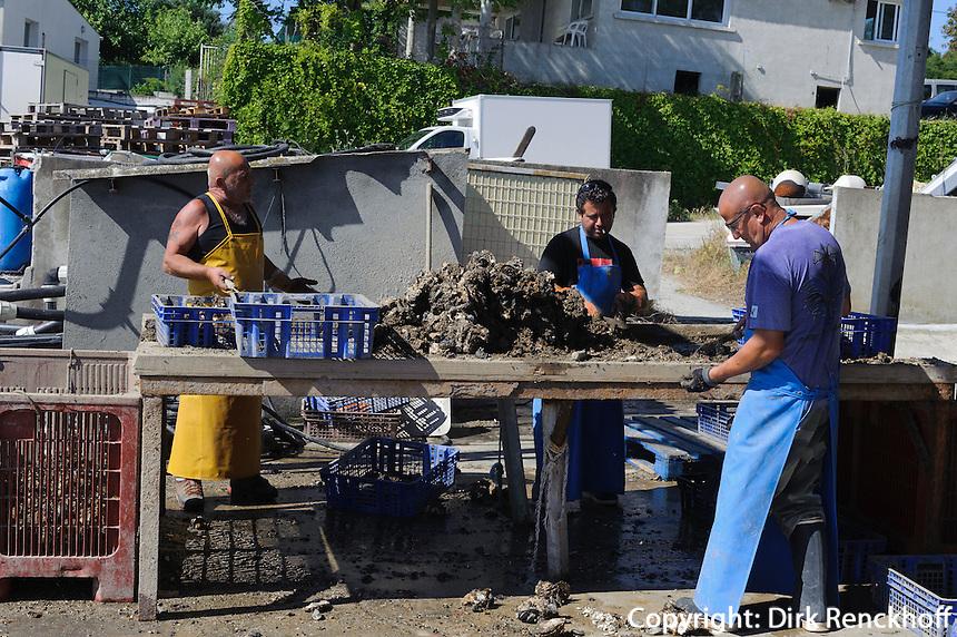 Austernzucht um Etang de Diane, Korsika, Frankreich