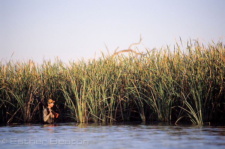 Duck hunter in reeds. Barren Box Swamp. western New South Wales
