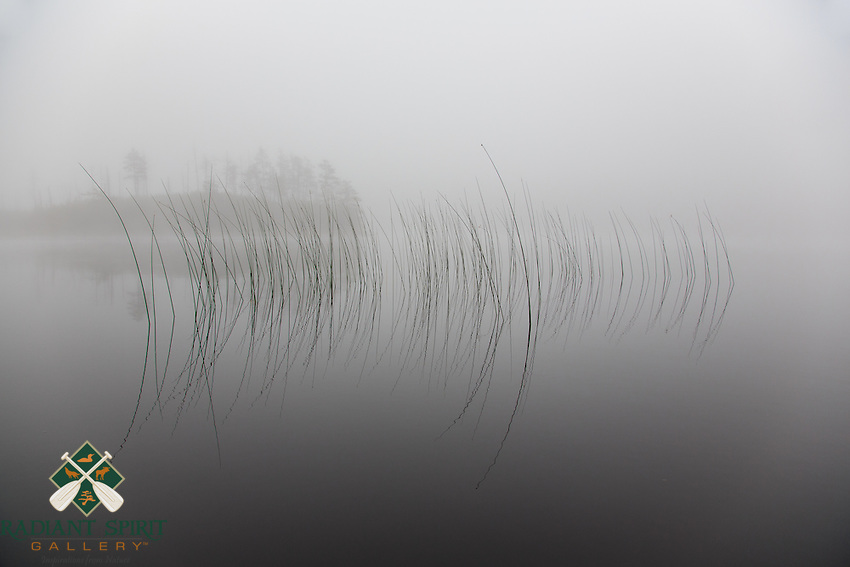 &quot;Symmetry&quot;<br />