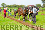 Jerimiah and JJ Delaney in action with the help of Billy O'Connell and Mary Herlihy and horses Toby and Fox at the South Kerry Ploughing Championships in Fossa on Sunday