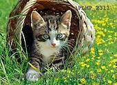 Marek, ANIMALS, REALISTISCHE TIERE, ANIMALES REALISTICOS, cats, photos+++++,PLMP2311,#a#