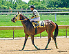 Littlemissperfect winning at Delaware Park on 6/24/15