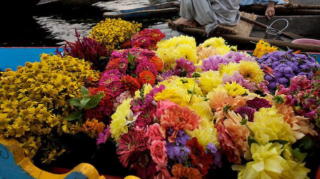 Flowers at the floating vegetable market, Srinigar, Kashmir