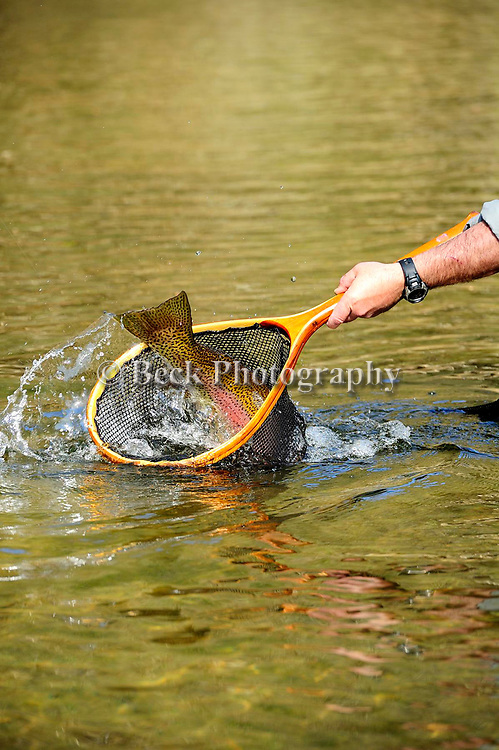 FLY FISHING, SPRING SEASON