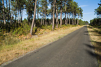 Road in the Landes Forest, Aquitaine, France.