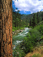 Scenic summer landscape of a creek with the trunk of a ponderosa tree in the foreground, forest in the background. Idaho.