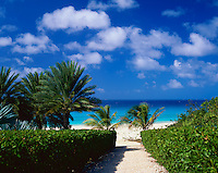 Anguilla, BWI:  A hibiscus hedge borders a pthway leading down to a deserted white beach and turquoise waters of Long Bay