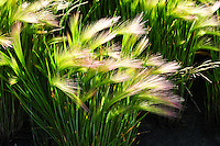 """BLOWING IN THE WIND""<br />
