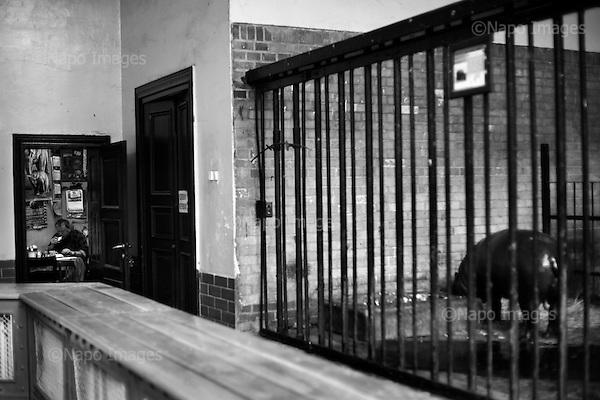 Wroclaw, Poland, April 5, 2009:<br /> Zoo employee and a Pygmy Hippopotamus having their morning breakfast at the Wroclaw Zoo.(Photo by Piotr Malecki / Napo Images)..Pracownik Zoo i jego podopieczny hipopotam pigmejski jedza sniadanie..Wroclaw, Kwiecien 2009.Fot: Piotr Malecki / Napo Images