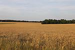 Hay field, Lizella. Ga. May 12, 2016.
